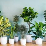 en güzel ev bitkileri huglero.com