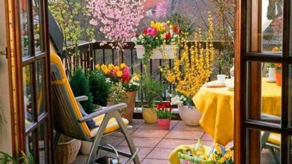 https://.huglero.com, https://img.huglero.com , süs bitkileri, iç mekan süs bitkileri,