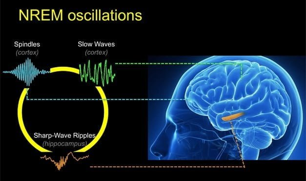 beyin sinyalleri https://huglero.com
