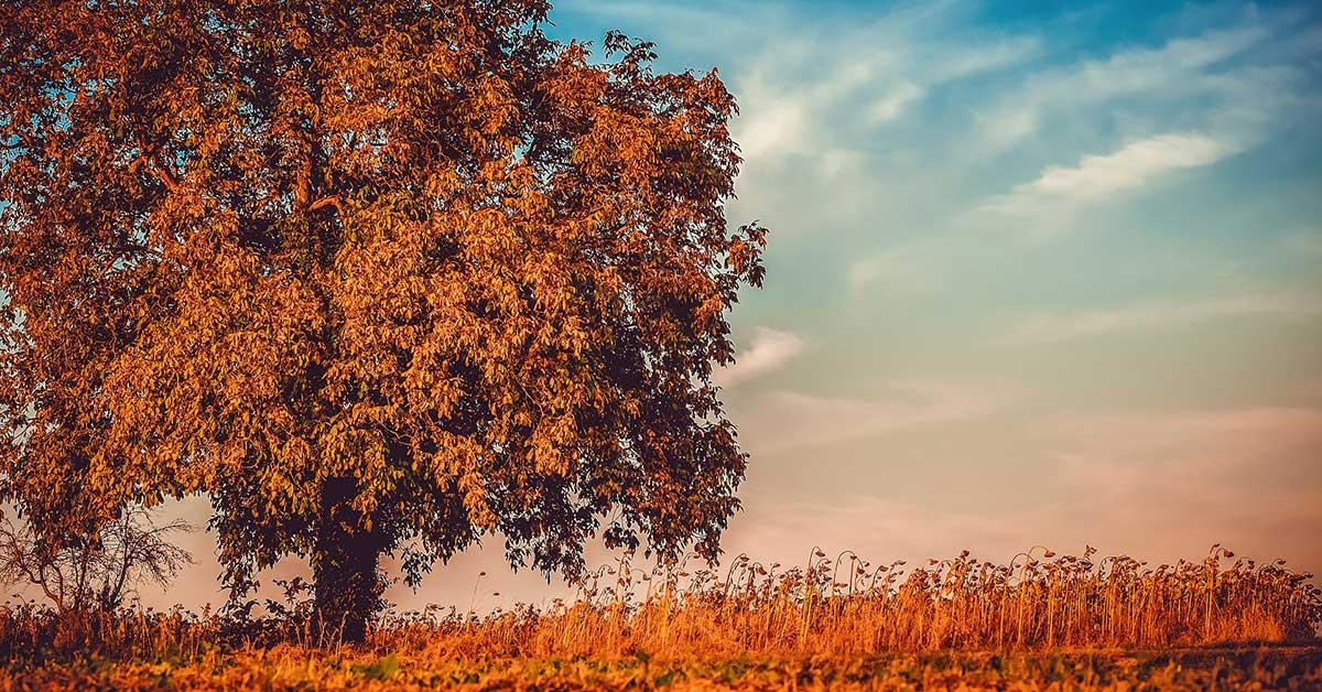kış ceviz ağacı https://huglero.com