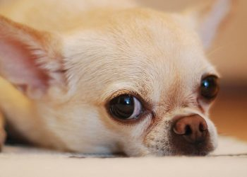 üzülüş köpek https://img.huglero.com