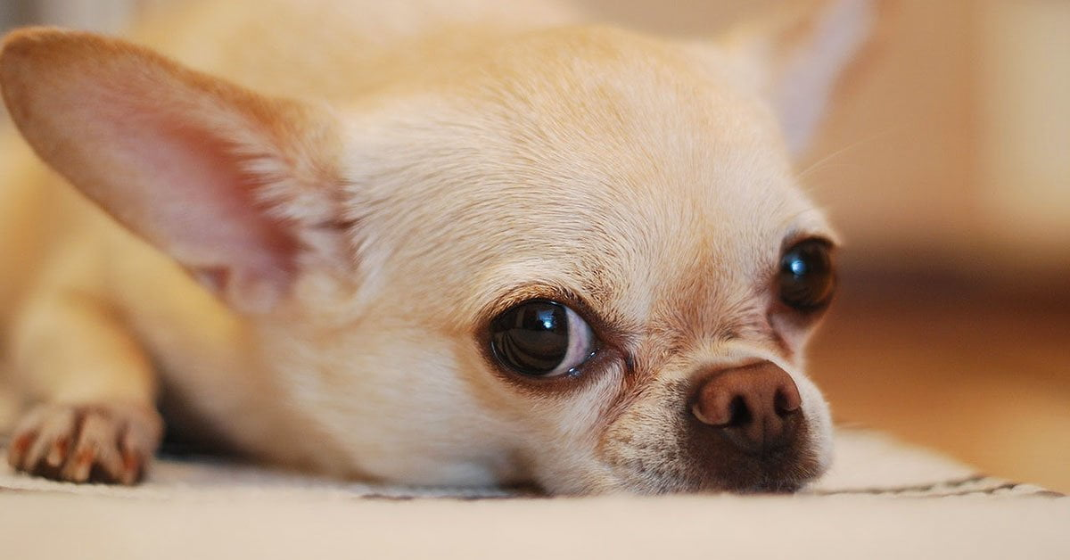 üzülüş köpek https://huglero.com