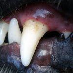 köpek diş sağlığı https://img.huglero.com