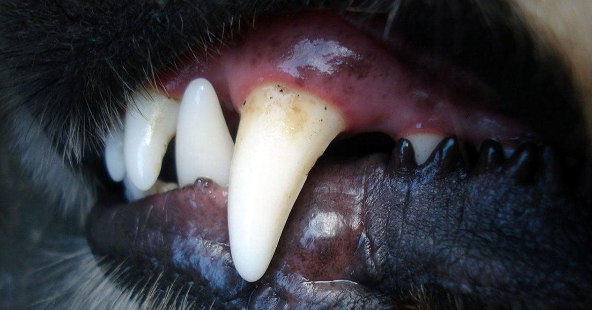 köpek diş sağlığı https://huglero.com