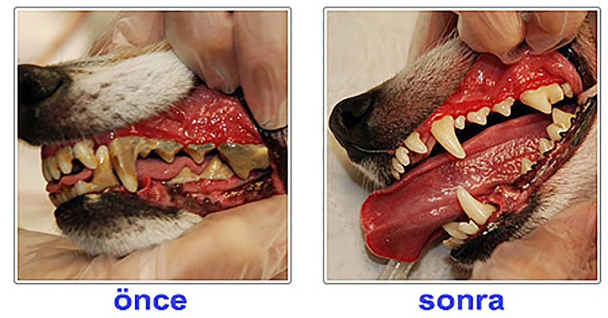 köpek diş bakımı https://huglero.com