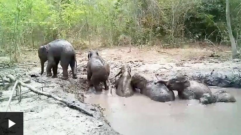fil yavruları kurtarma https://img.huglero.com
