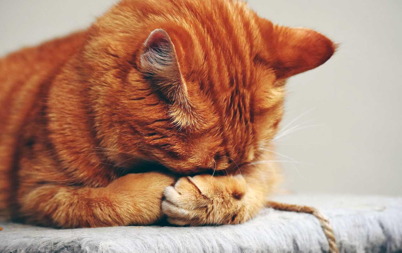 Kediler neden çok uyur? kedilerin çok uyumasının nedeni https://huglero.com
