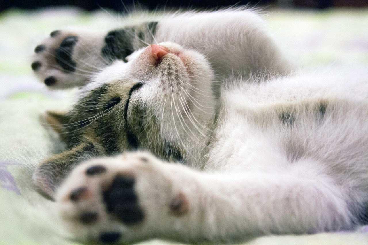 kediler rüya görür mü https://huglero.com