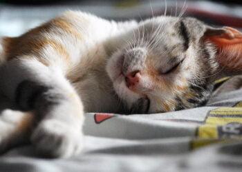 kedi uyuması https://img.huglero.com