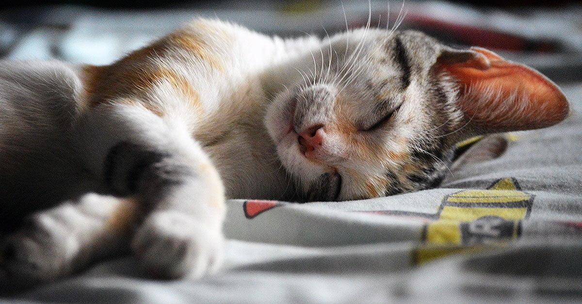 kedi uyuması https://huglero.com