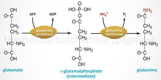 glutamine amino https://huglero.com/glutamin-almak-gerekli-mi/ Muhtemelen Etrafınızda sıkça duyduğunuz bir destekleyici olan glutamini git gide merak mı etmeye başladınız? Acaba insanların dediği gibi, 'protein, bcaa ve glutamin alıyorum' üçlüsünün içindeki glutamine gerçekten ihtiyaç var mı? Varsa ne zaman Glutamin almalısınız? Bu yazımda bu soruları cevaplamaya çalışacağım.