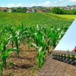 silajlık mısır dekara ne kadar ekilir https://huglero.com