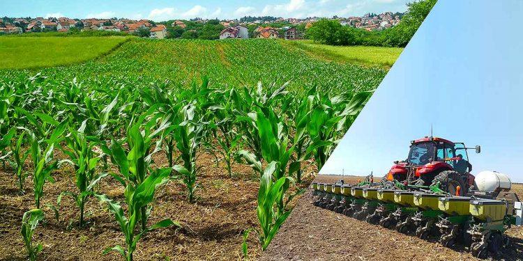 silajlık mısır dekara ne kadar ekilir https://img.huglero.com