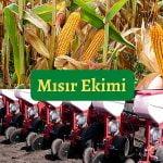 mısır ekimi nasıl yapılır, mısır nasıl ekilir? https://huglero.com