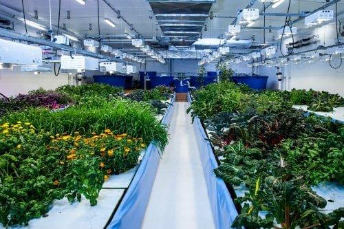 bitki yetiştirme lambası nasıl olmalı? led ampul özellikleri https://huglero.com