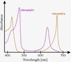 LED chlorophyll 300x266 1 Bitki Yetiştirme Lambası Nasıl Olmalı? | LED Işık Seçerken Nelere Dikkat Etmelisiniz? | bitki yetiştirme lambası nasıl olmalı https://huglero.com