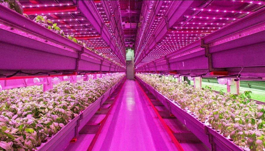 Bitkiler için en ideal beyaz ışık hangisidir https://huglero.com