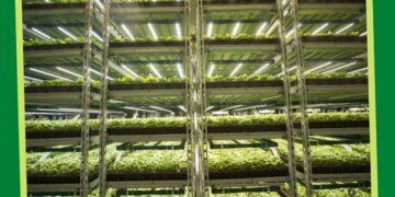 bitkilerde en ideal büyütme ışığı nasıl olmalıdır? https://huglero.com