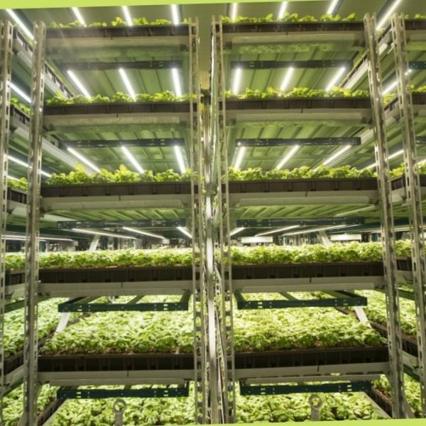 bitkilerde en ideal büyütme ışığı nasıl olmalıdır? https://img.huglero.com