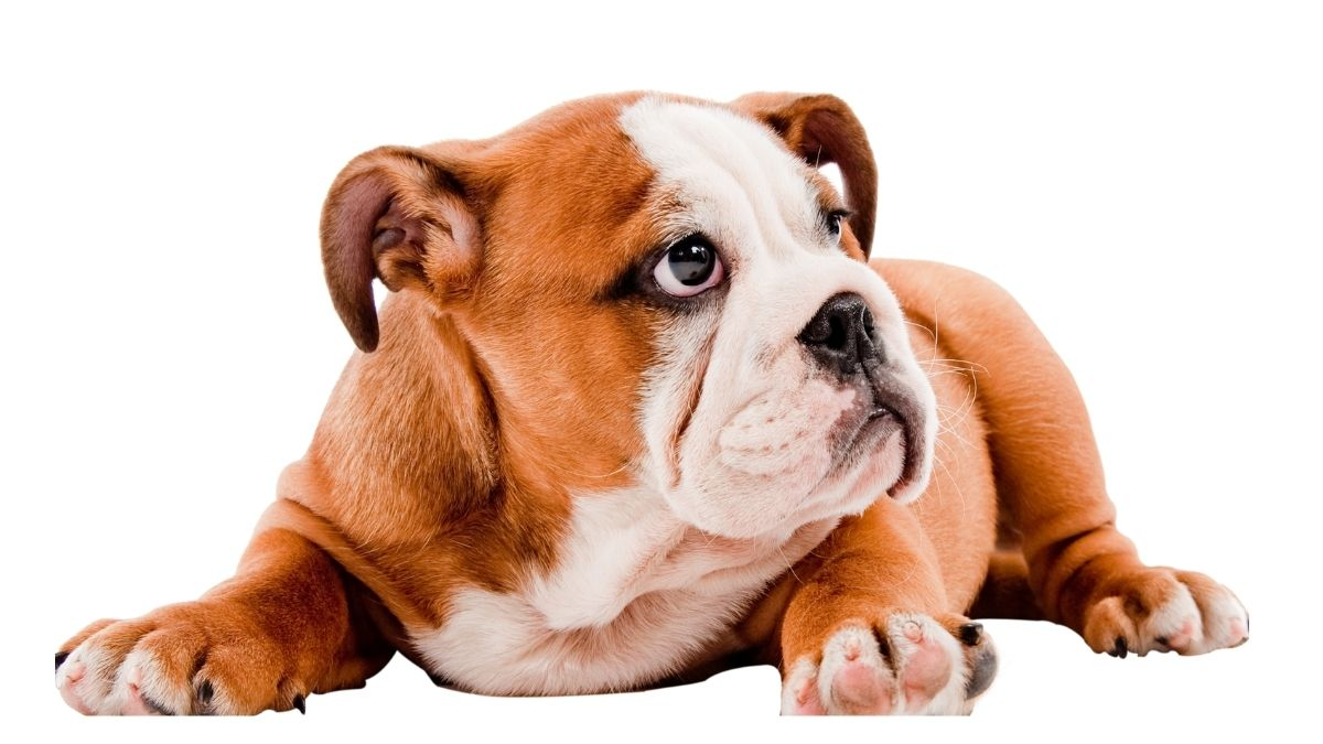 Köpekler badem yer mi? kuruyemiş zararlı mıdır? https://huglero.com