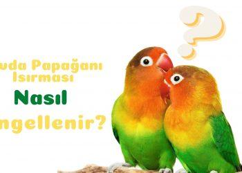 sevda papağanı ısırması nasıl engellenir https://img.huglero.com