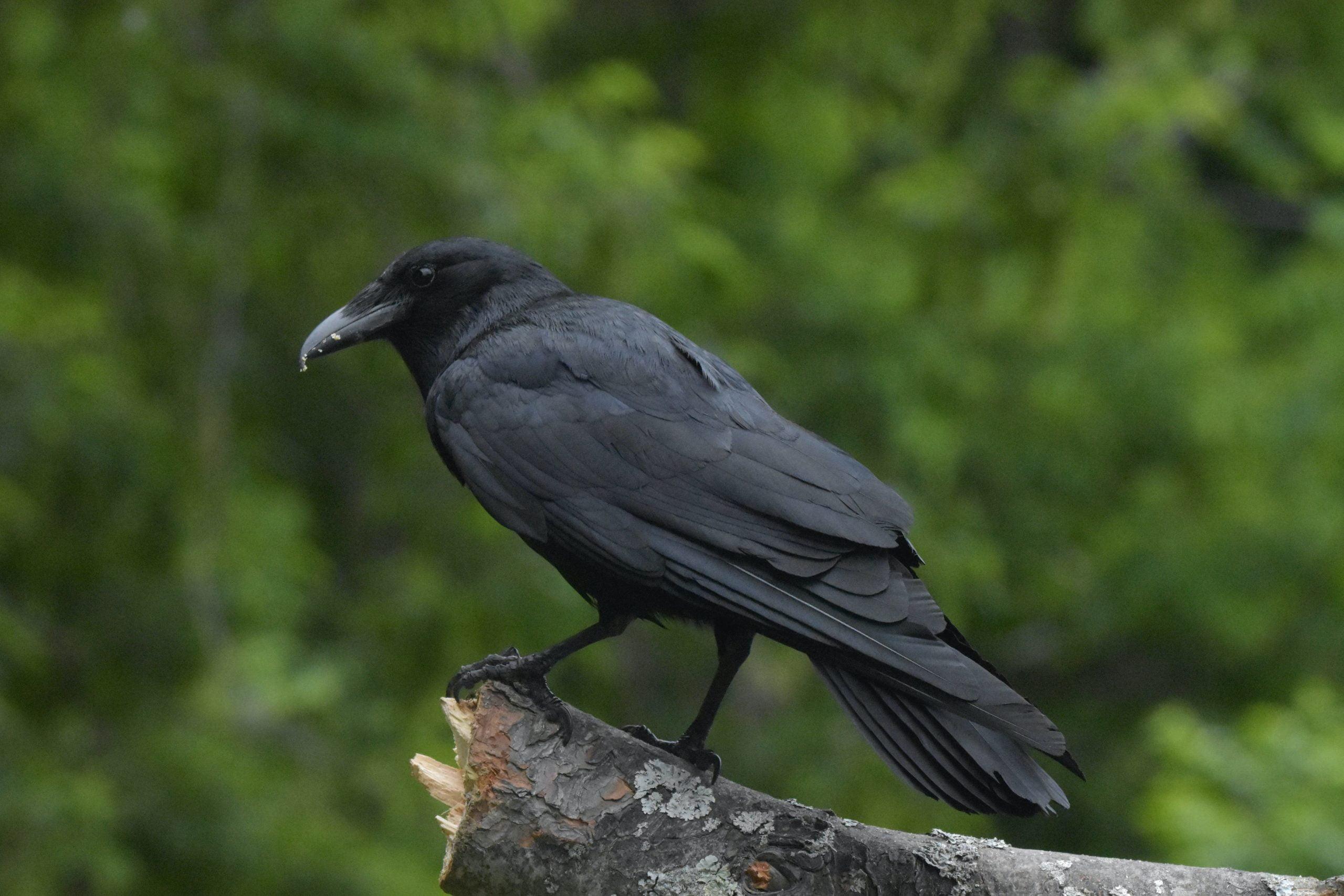 Yabani Kuşlar https://huglero.com