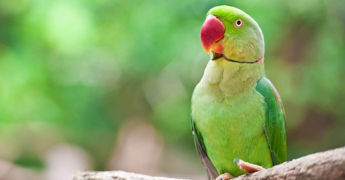 Kuşların en çok korktuğu nesneler https://huglero.com