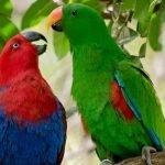 kuşları korkutan şeyler https://huglero.com